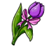 Purple Mother's Day Tulip