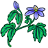 Royal Blue Wood Anemone